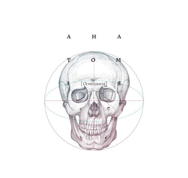 Anatomy-qidye-1