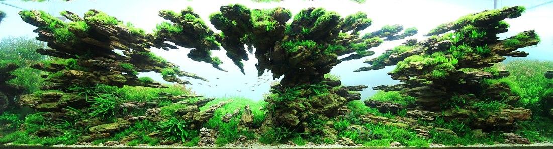 Competitve Aquascaping-qidye-9