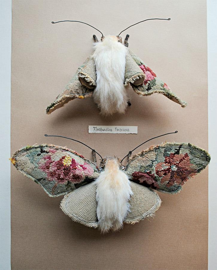 Finch-qidye-1