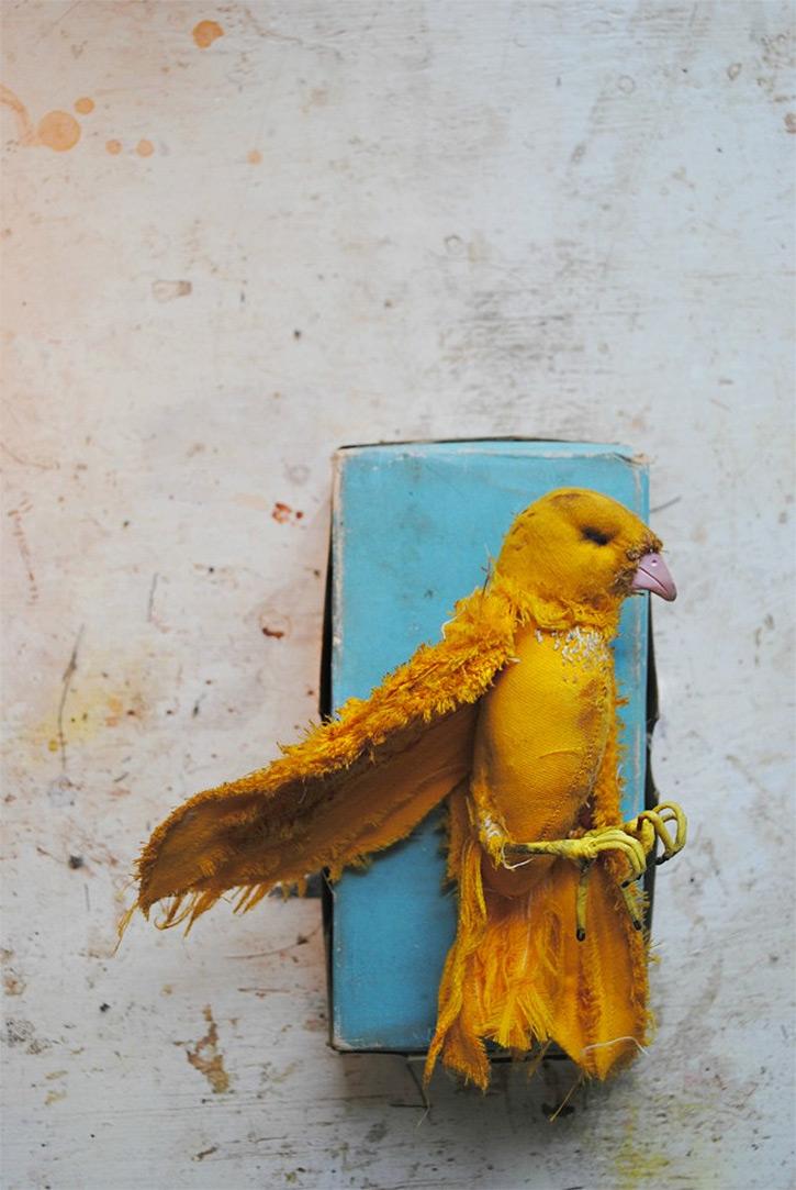 Finch-qidye-2